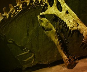 The Biggest Dinosaur (and Bone) Featured this Week