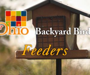 How-to Birdwatch from Your Backyard
