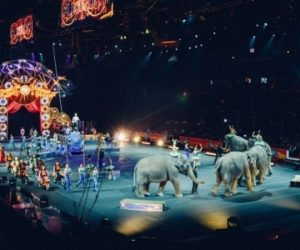 American Experience: Circus